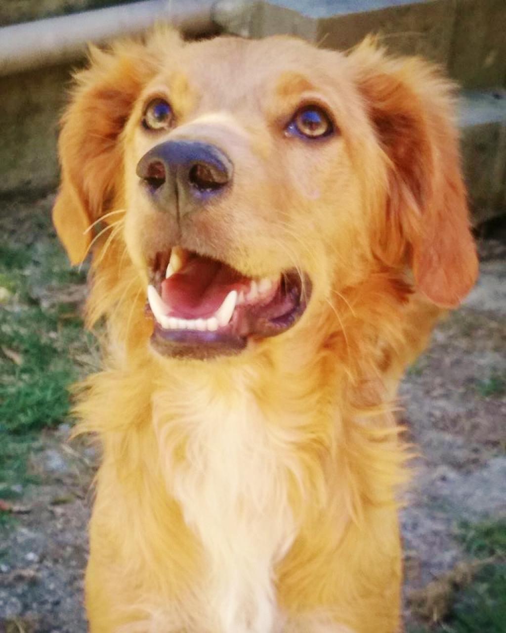 1530181411 cani gigino taglia medio piccola for Nomi per cani maschi taglia piccola