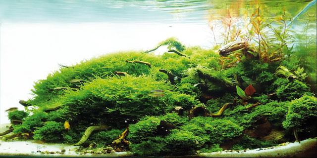 Acquario curiosita for Acquario acqua dolce