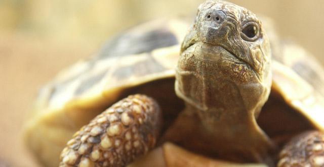 Veterinario risponde non pet - Pagine di colorazione tartaruga ...