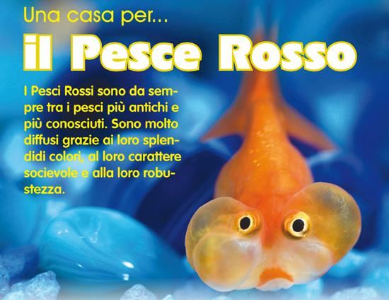 Una casa per il pesce rosso for Vasca per pesci