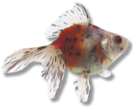 Una casa per il pesce rosso for Piscina per pesci rossi