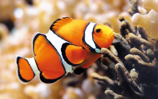 Alimentazione per l 39 acquario marino for Acquario per pesci