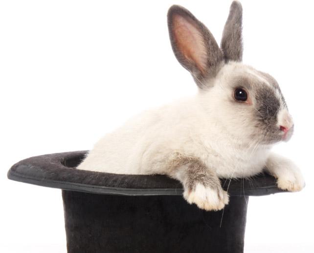 Il Coniglio Di Casa, Tuttavia, Al Sicuro Dai Predatori, Non Risente Di  Particolari Svantaggi.