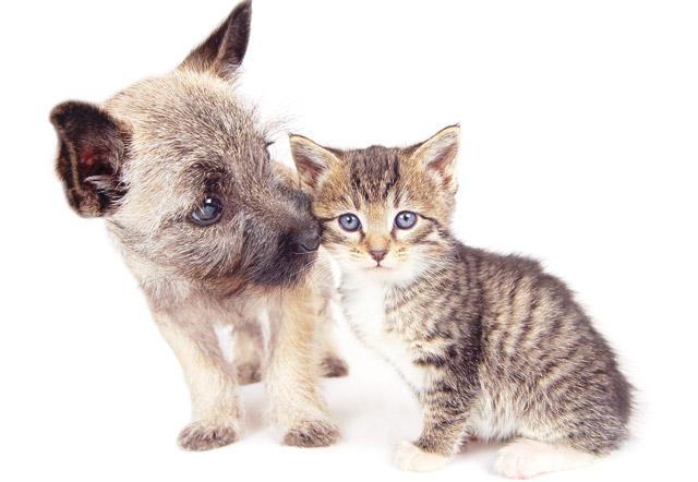 La Diarrea Nei Cuccioli E Nei Gattini Speciali