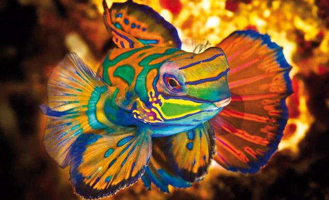 Quanto vive un pesce for Quanto vive un pesce rosso