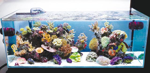 Allestimento acquario marino acquario for Arredamento acquario