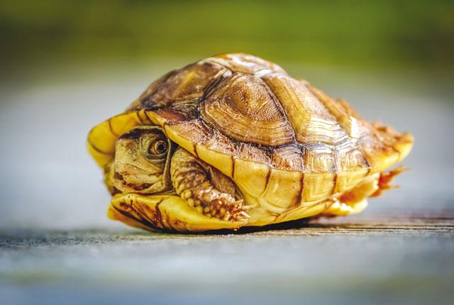 La corazza delle tartarughe for Contenitore tartarughe
