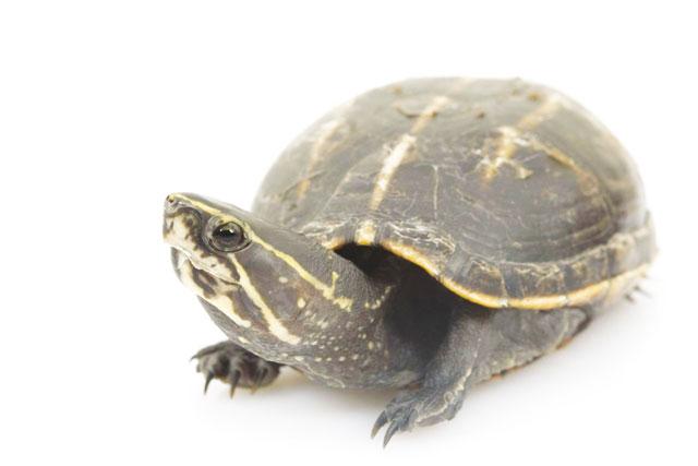 La corazza delle tartarughe for Contenitore per tartarughe