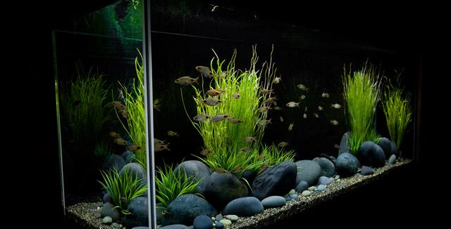 Allestire l 39 acquario di casa for Legni per acquario