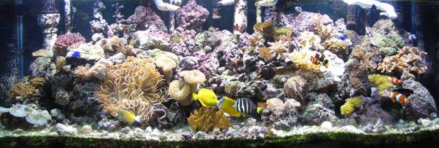 Pesci non adatti alla vita nell acquario di casa acquario - Acquario in casa ...
