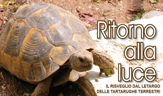 Il risveglio dal letargo delle tartarughe terrestri for Letargo tartarughe acqua