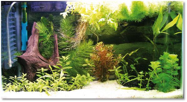 come allevare in casa il pasto per i nostri pesci acquario