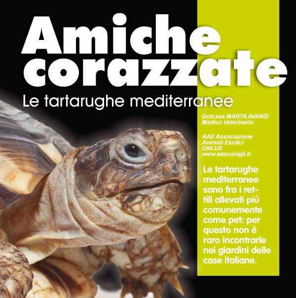 Le tartaruge mediterranee rettili for Vitamina a per tartarughe