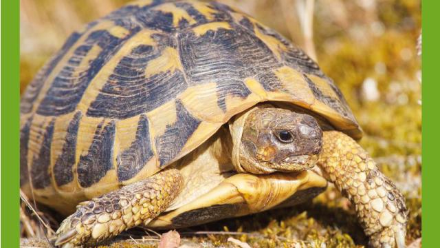 La casa delle tartarughe rettili for Luce per tartarughe