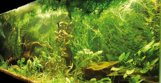Allestimento dell 39 acquario for Acqua per acquario