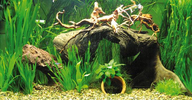 Il corretto dosaggio dell\u0027anidride carbonica in acquario è fondamentale se  si accumula in acqua, infatti, essa può avere due effetti, entrambi  pericolosi.