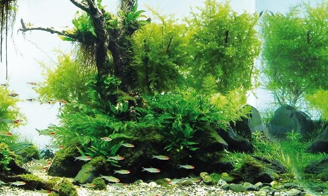 Piante nell acquario idee per il design della casa for Acquario casa prezzi