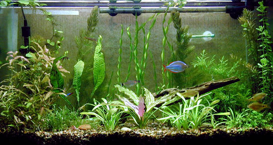 Il fondale e le rocce per l 39 acquario d 39 acqua dolce acquario for Fondo per acquario