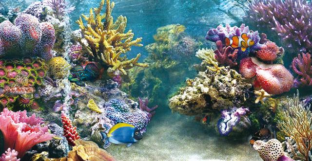 Il fondale e le rocce per l 39 acquario d 39 acqua dolce acquario for Pesci per acquario tropicale