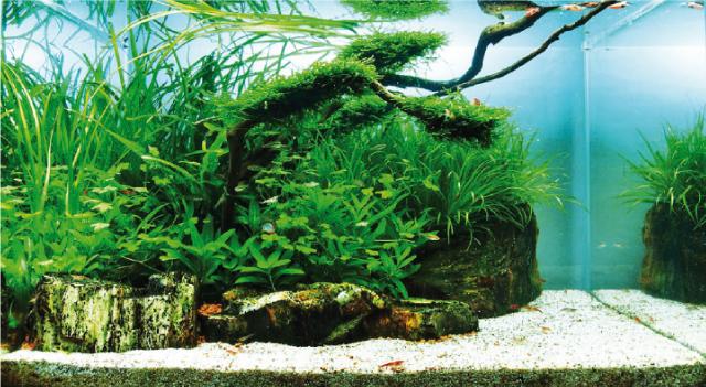 10 consigli per mantenere in salute l 39 acquario for Piante da acquario