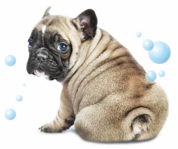 Il primo bagno del cucciolo cani - Bagno cane dopo antipulci ...