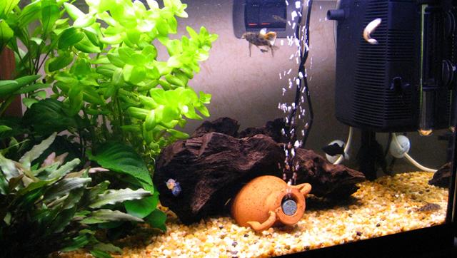 Le piante per l 39 acquario acquario for Vasca pesci giardino
