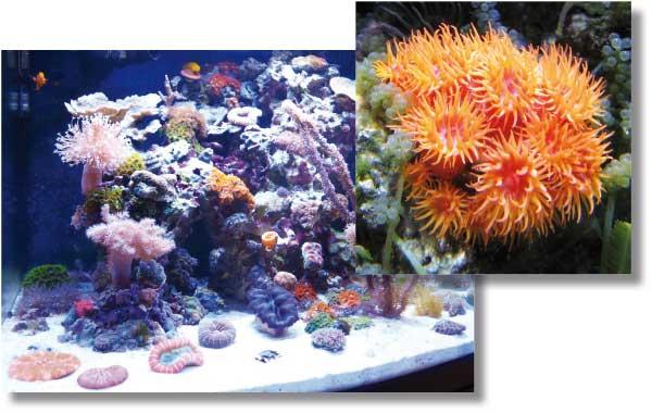 I Coralli Sono Animali I coralli sono tra gli animali