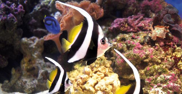 Gli ambienti naturali dei pesci d 39 acqua salata acquario for Acquario acqua salata