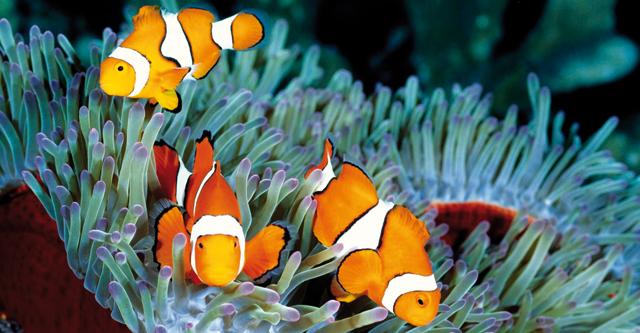 Gli ambienti naturali dei pesci d 39 acqua salata acquario for Immagini di pesci disegnati