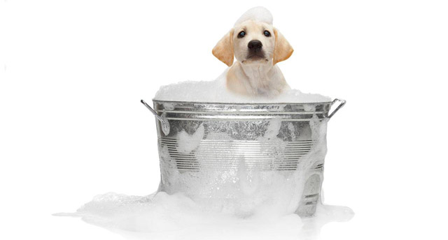 Fare il bagno al cane cani - Come fare il bagno al cane ...