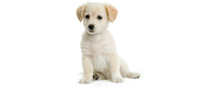 Fare il bagno al cane cani - Bagno cane dopo antipulci ...