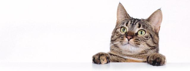 Quando e quanto deve mangiare il mio gatto for Cosa mangia il gatto