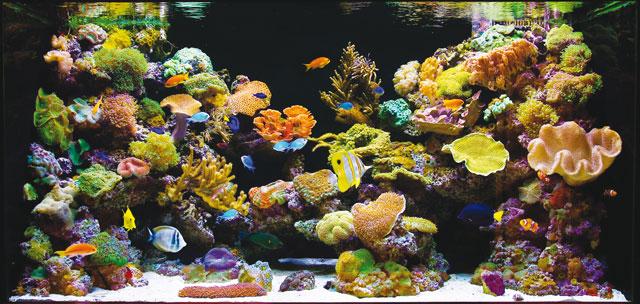 Le malattie dei pesci d 39 acquario dovute a stress acquario - Pesci e acquario a letto ...