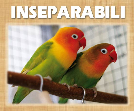 Inseparabili uccelli for Veterinario di punto di cabina