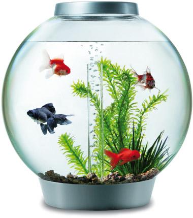 L 39 acquario a misura di bambino for Pesci per acquario piccolo