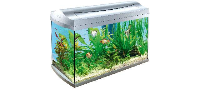 Saper comprare un acquario for Comprare un acquario