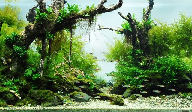 Le caratteristiche dell acqua nell acquario dolce for Pesci per acquario piccolo