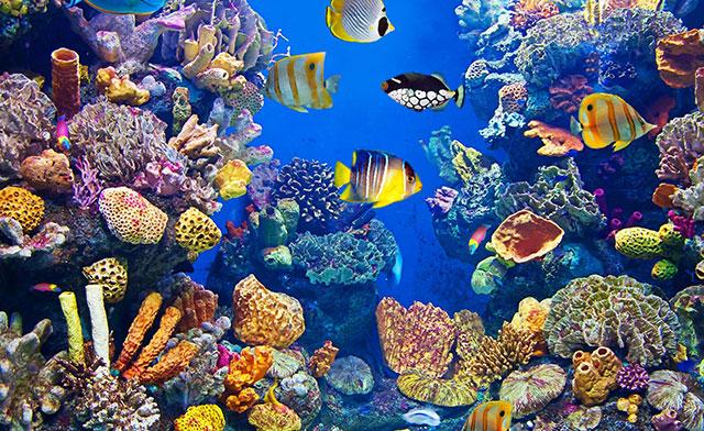 Plafoniere Hqi Per Acquario Marino : Progettare e gestire un acquario marino
