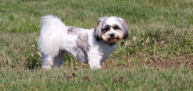 Problemi neuroloci nel cane for Antinfiammatorio cane