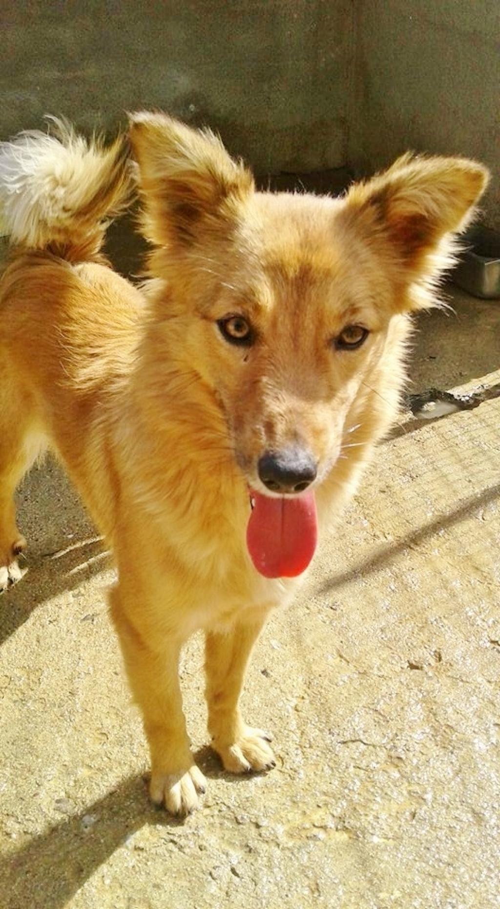 1530181473 cani foxina taglia medio piccola for Nomi per cani maschi taglia piccola