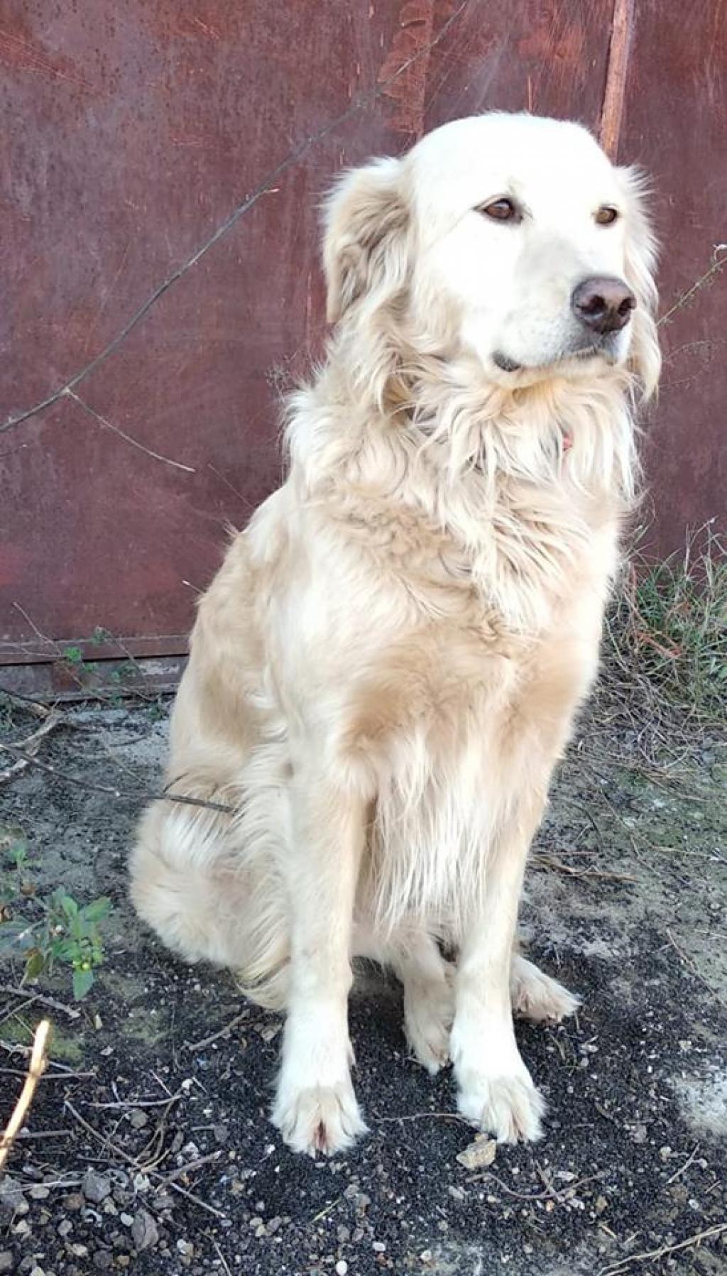 1547808159 Cani Bianca