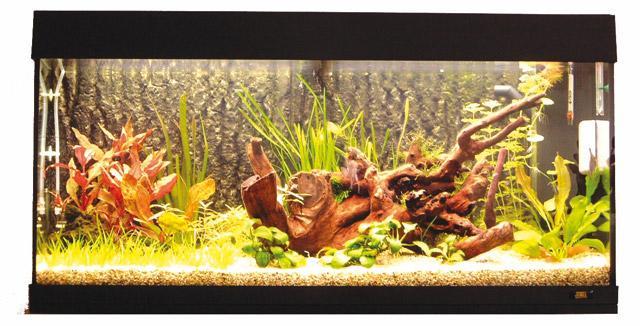 I parassiti esterni dei pesci acquario for Pesci per laghetti esterni