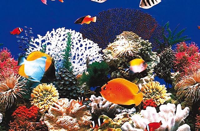 L 39 alimentazione dei pesci acquario - Pesci e acquario a letto ...