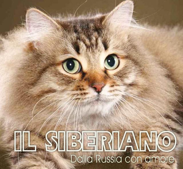 Siberiano Gatti