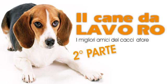Il Lavoro Del Cane Il Cane Da Caccia Cani