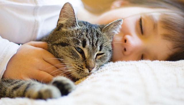 Cosa Spaventa Il Gatto Gatti